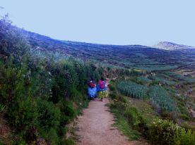 La Isla del Sol, Zona Sur, Lago Titi Caca. Cholas campesinas retornando a sus casas. El gobierno boliviano actual mantiene un fuerte respeto a las culturas indígenas. Ya no existen prohibiciones de estar en ciertos lugares públicos.
